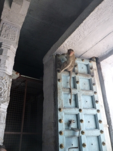 Monkey on the door