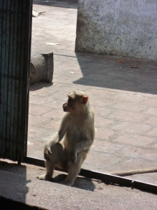 Monkey at the door to the sanctum