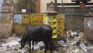 A dump in Mint Street, Chennai